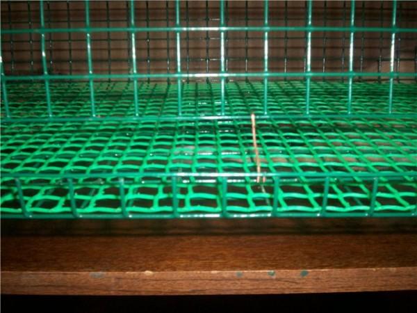 Размер клеток для перепелов своими руками фото 51